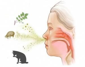 Возникновение аллергического фарингита