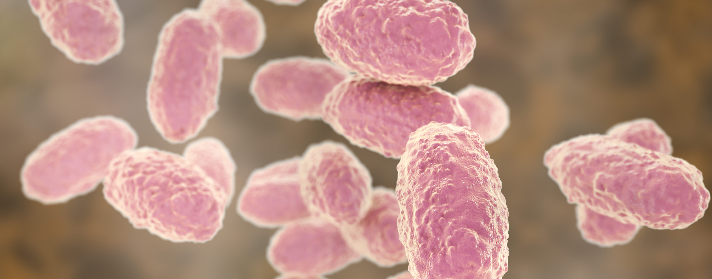 Микробиологическая характеристика возбудителя коклюша
