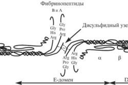 Молекула фибриногена