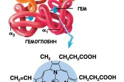Схема молекулы гемоглобина