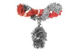 Молекула иммуноглобулина