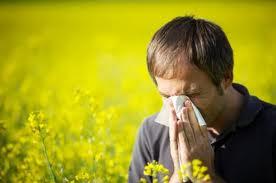 круглогодичный аллергический проявления