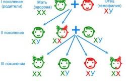 Механизм наследования гемофилии