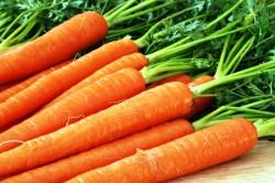 Морковь для повышения уровня лейкоцитов