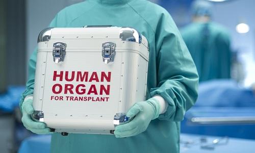Трансплантация жизнеспособного органа