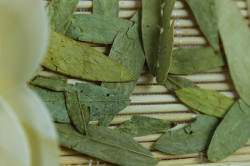 Листья сенны при запорах